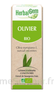 Herbalgem Olivier Macérat bio 30ml à BIGANOS