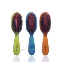 Cartel Brosse cheveux pneumatique Sanglier /1 à BIGANOS